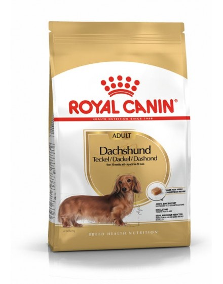 Dachshund Adult (Teckel)